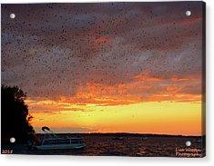 Purple Martin Sunset On Lake Murray Sc Acrylic Print