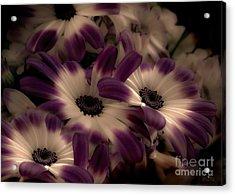 Purple Acrylic Print by Mehran Akhzari