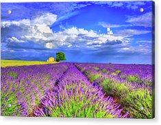 Purple Acrylic Print by Midori Chan