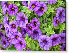 Purple Million Bells Acrylic Print