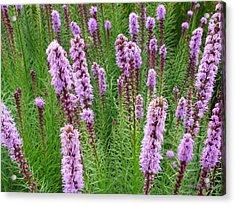 Purple Missles Acrylic Print by Deborah  Crew-Johnson