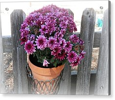 Purple On The Fence Acrylic Print