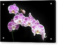 Acrylic Print featuring the photograph Purple On White On Black by Denise Bird