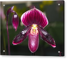 Purple Orchid Acrylic Print by Ann Tracy