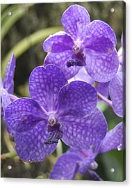 Purple Orchids Acrylic Print by Michael Peychich