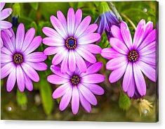Purple Pals Acrylic Print by Az Jackson
