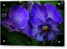 Purple Pansies Acrylic Print