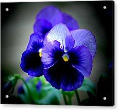 Purple Pansy - 8x10 Acrylic Print by B Nelson