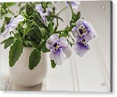 Acrylic Print featuring the photograph Purple Pansy Flowers by Kim Hojnacki