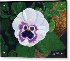 Purple Pansy Acrylic Print by Philip Hall
