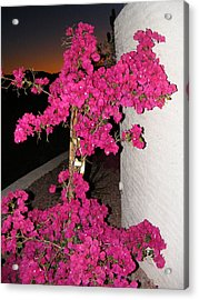 Purple Passion Against Desert Sunset Acrylic Print by Adam Cornelison