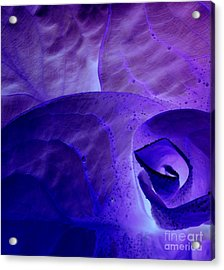 Purple Passion Acrylic Print by Erica Hanel