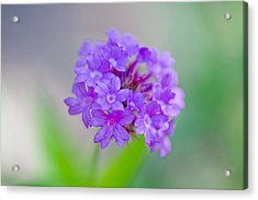 Purple Petals Acrylic Print by Az Jackson