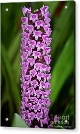 Purple Pillar Acrylic Print