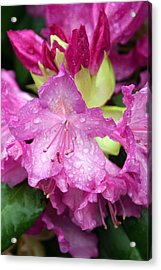Purple Pink Acrylic Print by Marty Koch