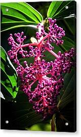 Purple Plant Acrylic Print