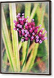 Purple Pleasure Acrylic Print by Elizabeth Babler