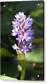 Purple Pond Stem Acrylic Print by James Granberry