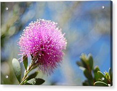Purple Puff Acrylic Print by Jean Booth