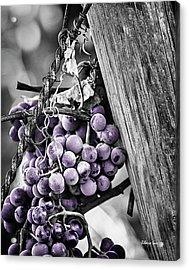Purple Punch Acrylic Print