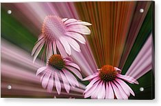 Purple Radiance Acrylic Print by Maria  Wall