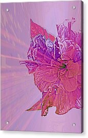 Purple Rays Of Happiness Acrylic Print by Rose  Hill