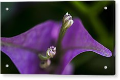 Acrylic Print featuring the photograph Purple Rest Flower by Paula Porterfield-Izzo