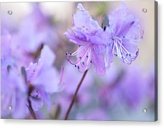 Acrylic Print featuring the photograph Purple Rhododendron 1. Spring Watercolors by Jenny Rainbow