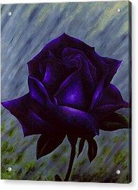 Purple Rose Acrylic Print by Brandon Sharp