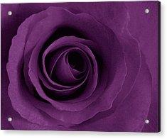 Purple Rose Of Artsy Acrylic Print by Leonard Rosenfield