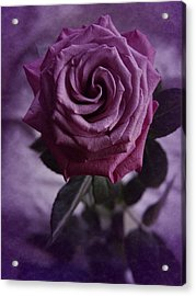 Purple Rose Of December Acrylic Print by Richard Cummings