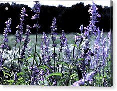 Purple Splendor Acrylic Print