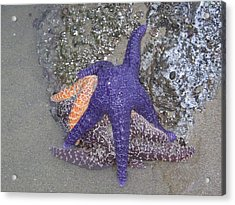 Acrylic Print featuring the photograph Purple Starfish by Angi Parks