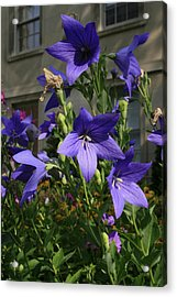 Purple Stars Acrylic Print by Alan Rutherford
