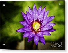 Purple Sunrise Acrylic Print by Scott Pellegrin