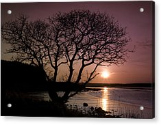 Acrylic Print featuring the photograph Purple Sunset With Tree And Lake by Gabor Pozsgai