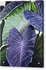 Purple Taro Acrylic Print by Sandra Blazel - Printscapes