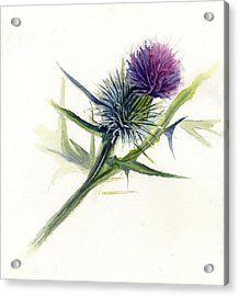 Purple Thistle Acrylic Print by Leslie Redhead