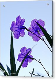 Purple Trio Acrylic Print by Christopher Holmes