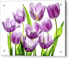 Acrylic Print featuring the photograph Purple Tulips by Rebecca Cozart