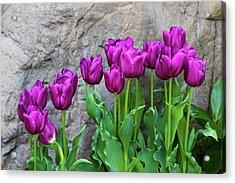 Purple Tulips Acrylic Print by Tom Mc Nemar