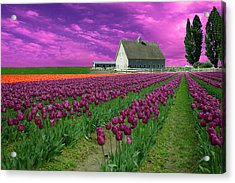 Purple Tulips With Pink Sky Acrylic Print