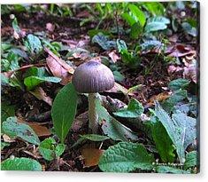 Purple Umbrella Mushroom Acrylic Print by Karen Roberson