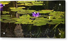Purple Water Lilly Distortion Acrylic Print by Teresa Mucha