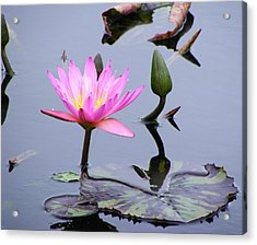 Purple Waterlily With Pod Acrylic Print by Margie Avellino