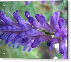Purple Wildflower Acrylic Print by Melissa Parks
