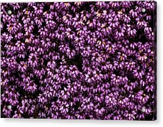 Purpleness Acrylic Print by John Gusky