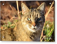 Purr-fect Kitty Cat Friend Acrylic Print