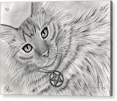 Acrylic Print featuring the drawing Purrfect Page Of Pentacles - Tarot Card Art by Carrie Hawks