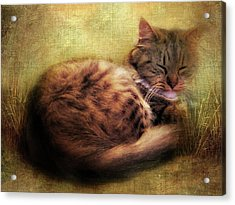 Purrfectly Content Acrylic Print by Jessica Jenney
